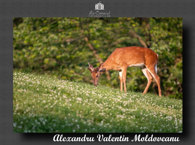ALEXANDRU VALENTIN MOLDOVEANU resize