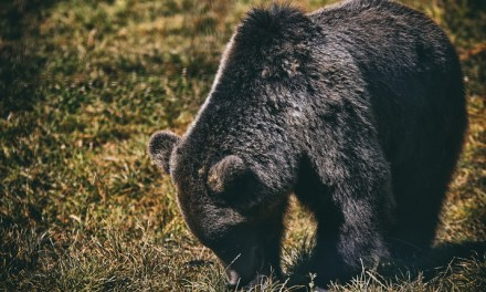 Tura foto, Wildlife – Toplita – 2020