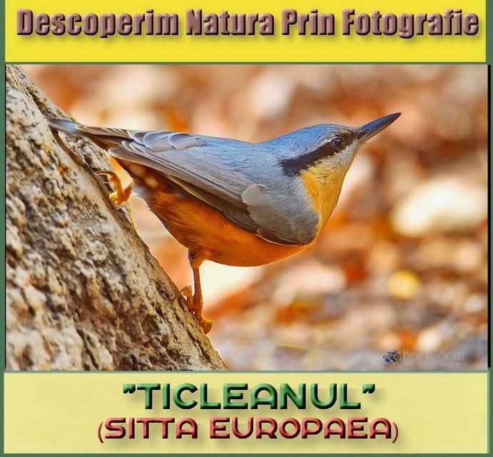 Descoperim Natura Prin Fotografie, astazi intalnim Ticleanul!