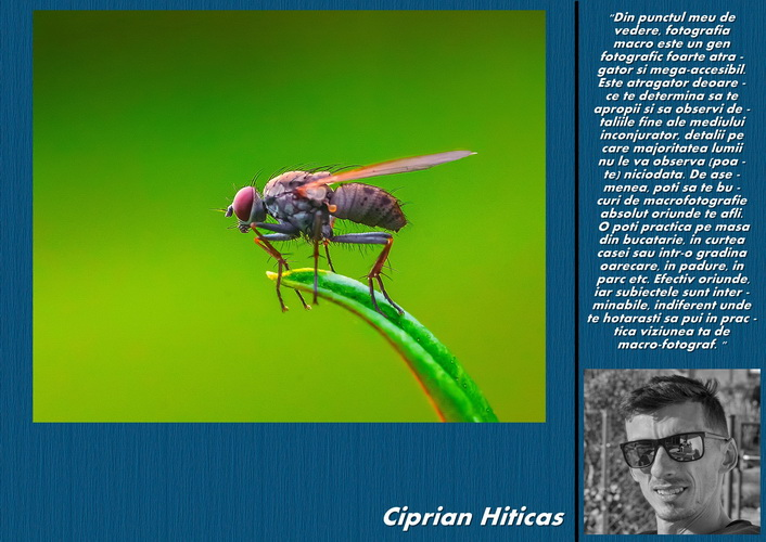 ciprian hiticas resize