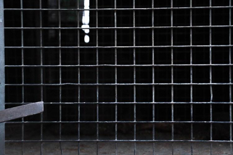 cirques avec animaux une prison