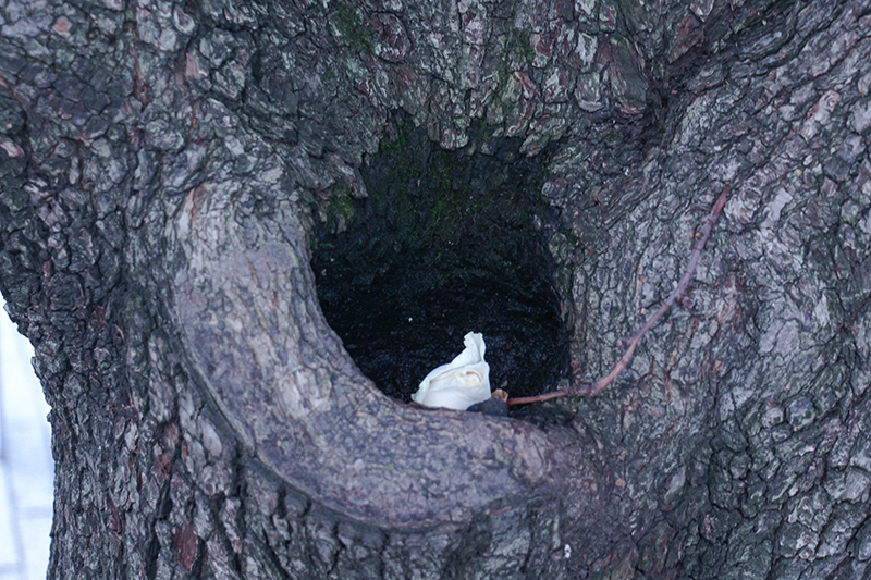 new york survivor tree