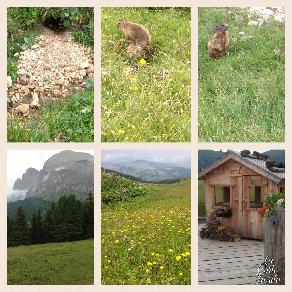 Alpe di Siusi Südtirol