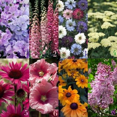 Fiori simbolo giardino stile inglese