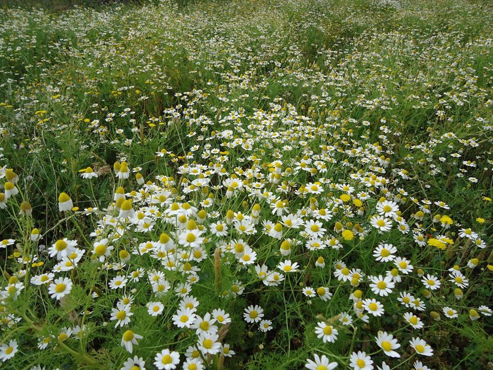 Flores silvestres, la Alpujarra en primavera