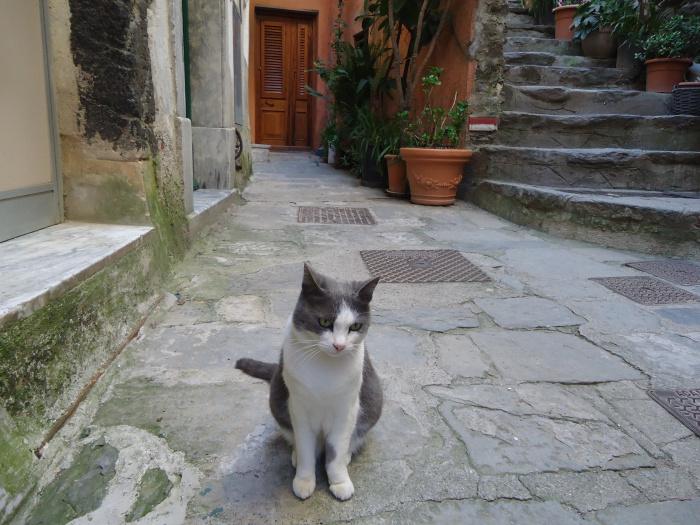 Gatito, Vernazza
