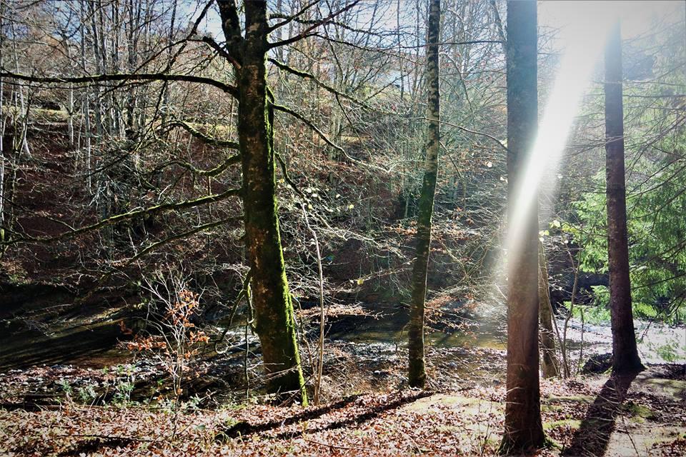 90debd3189 Selva de Irati, el bosque encantado de Navarra