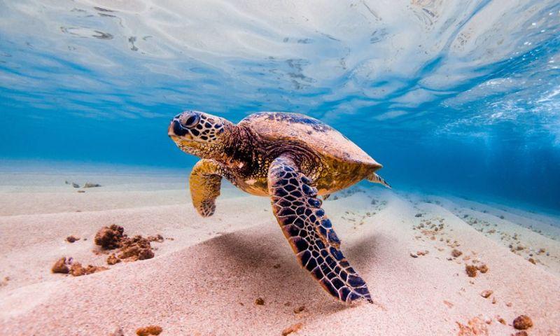 El desove de las tortugas en Costa Rica