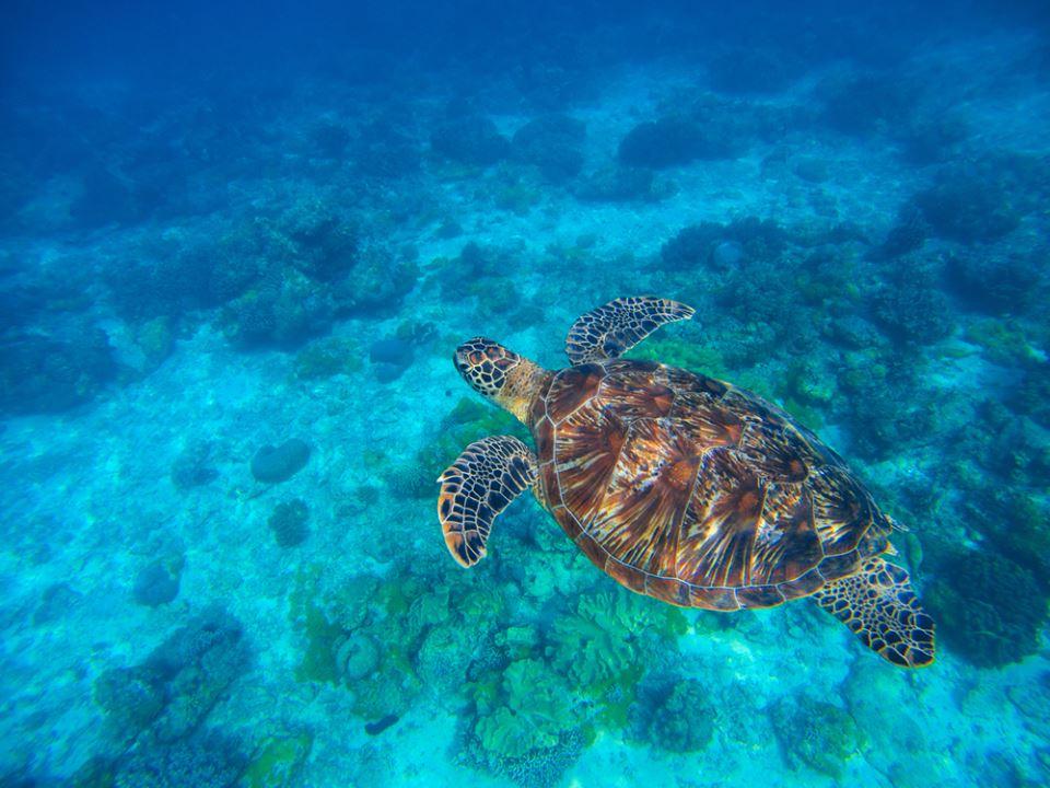 Tortuga marina, fuente: Shutterstock