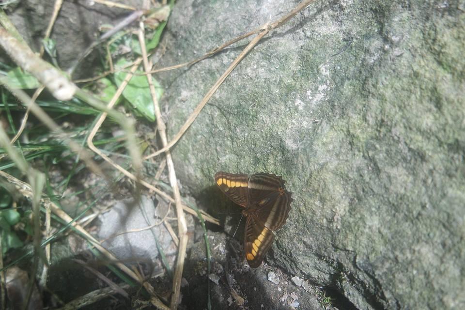 mariposa-senderos-de-boquete