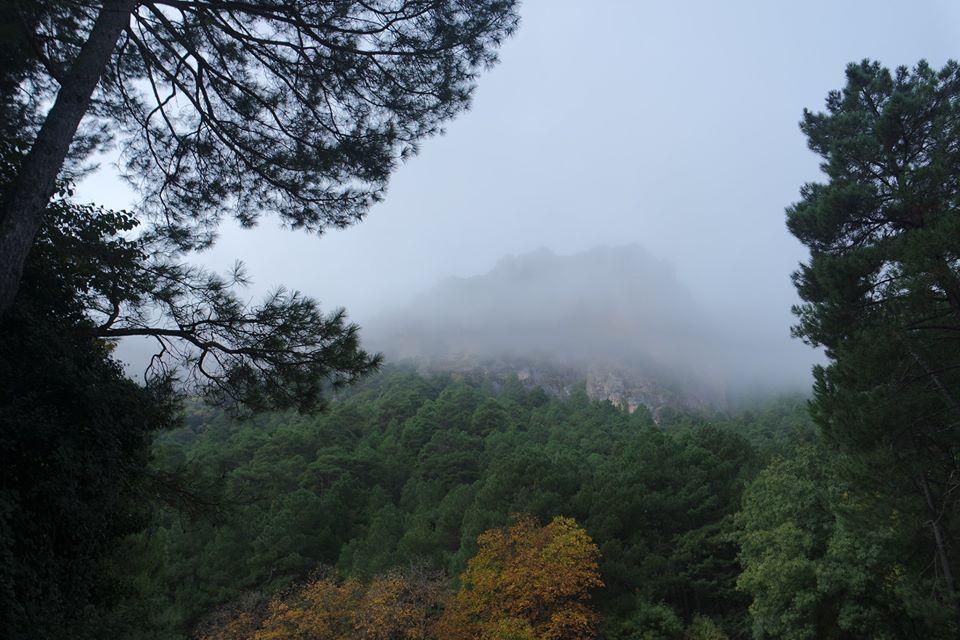 niebla-en-el-bosque-nacimiento-del-rio-mundo