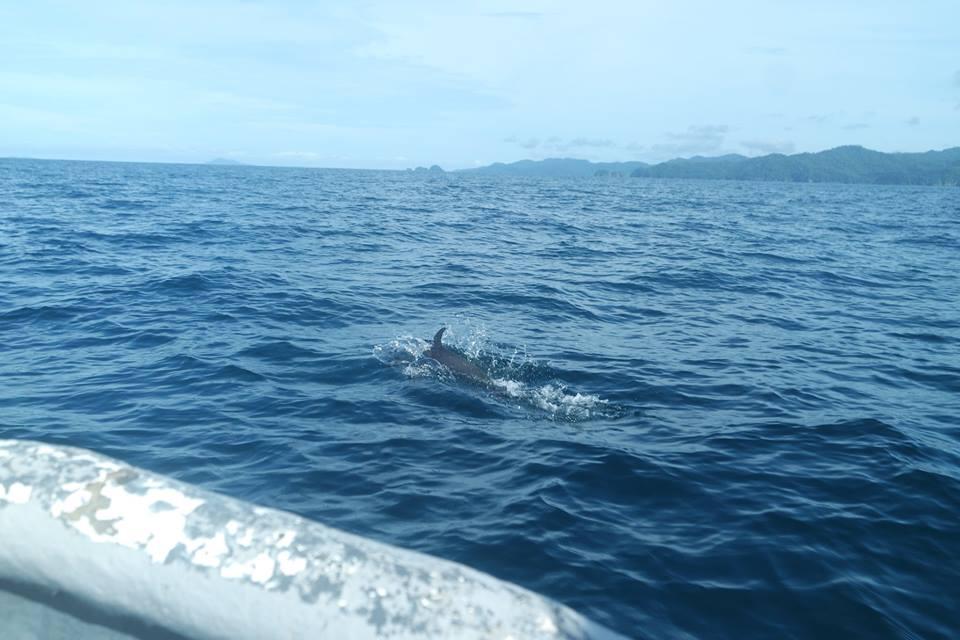 delfines-santa-catalina-y-coiba
