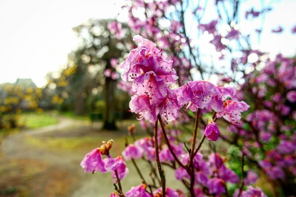 Jardín Botánico, qué ver en Aberdeen