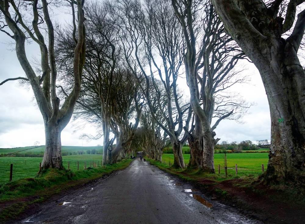 The Dark Hedges, Juego de Trono en Irlanda del norte
