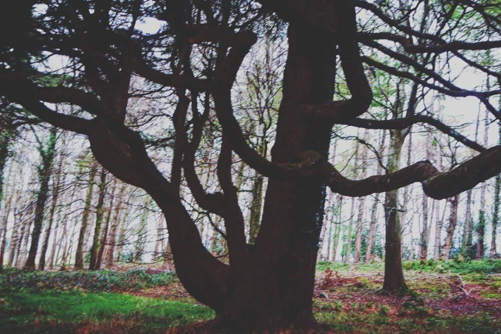 Tollymoreforest, Juego de Tronos en Irlanda del norte