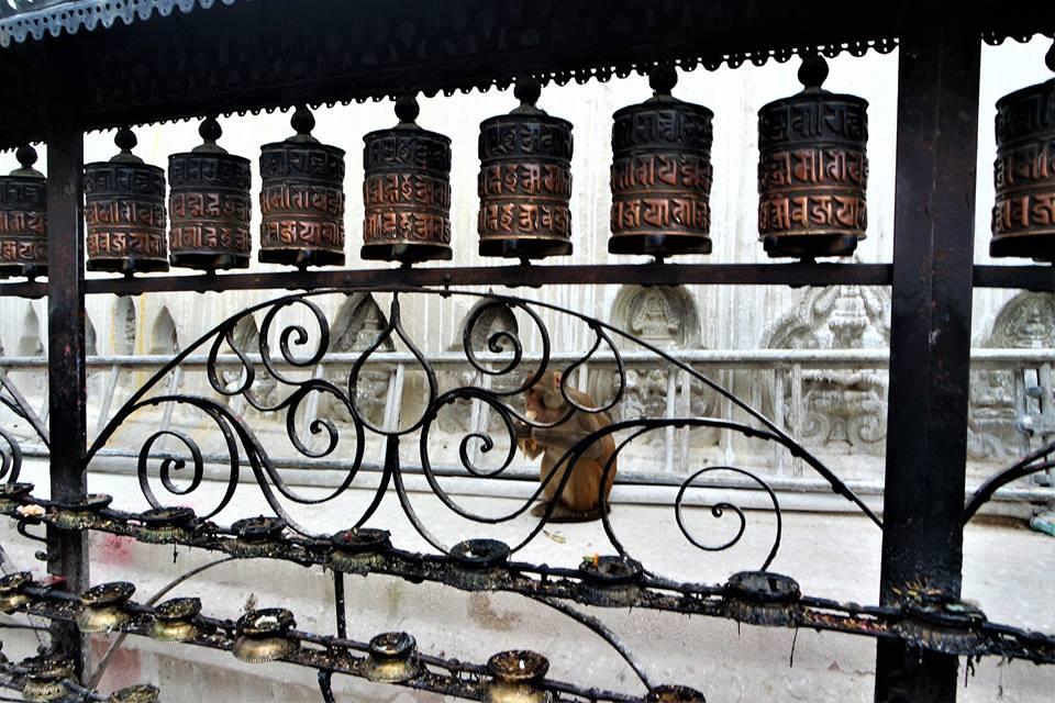 Mono en el templo de los Monos, valle de Katmandú