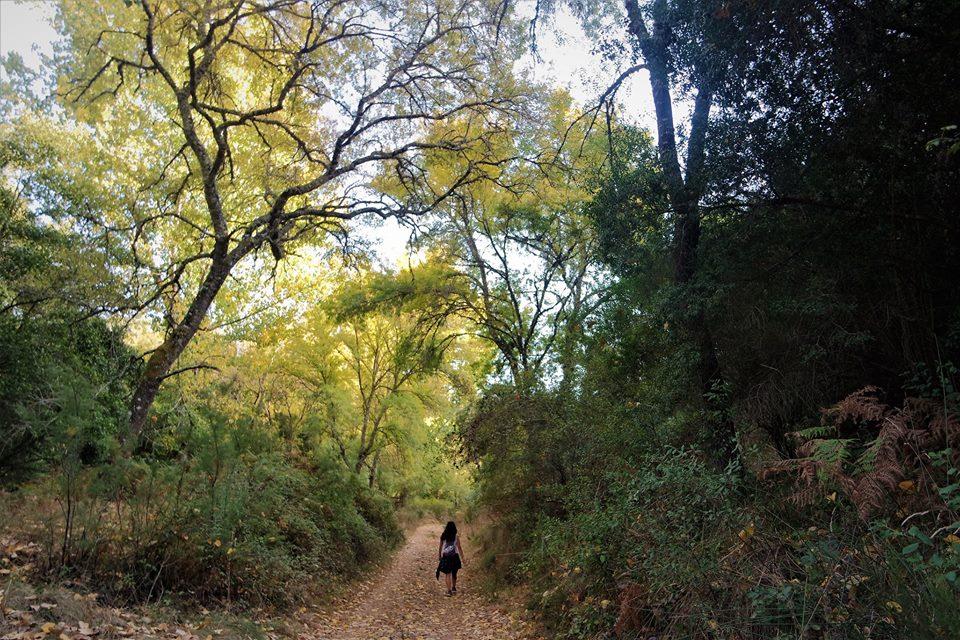 Ruta Vicentina, Camino Histórico
