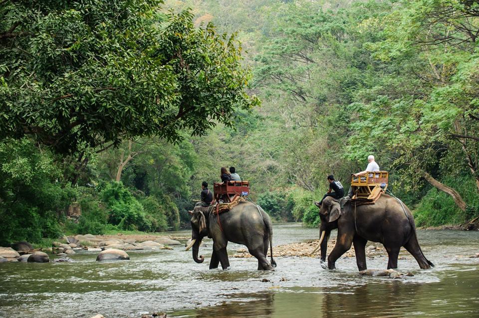 Tour con elefantes en Tailandia