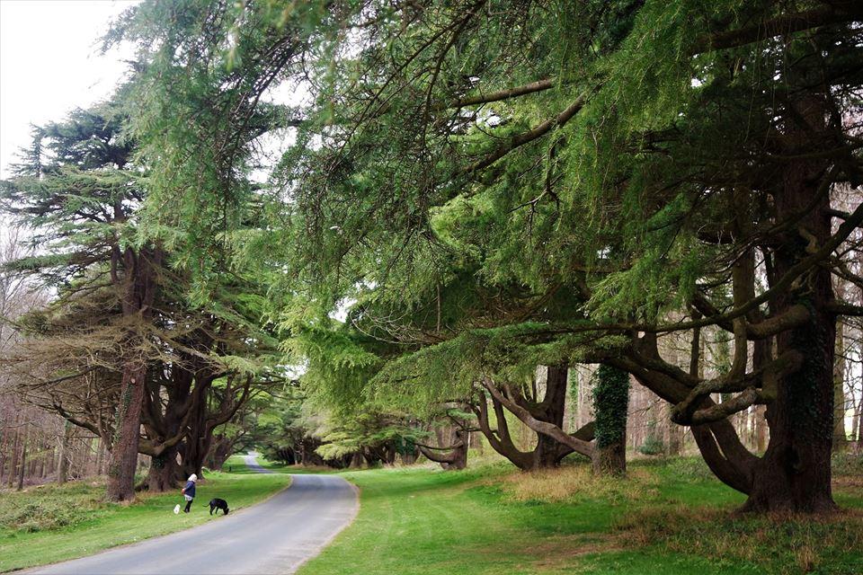 Bosque de Tollymore, Irlanda