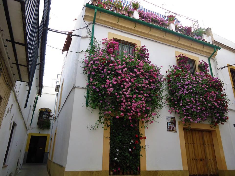Casas de la Judería, Córdoba