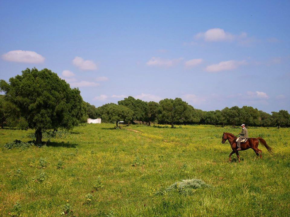 Qué ver en Medina Sidonia, los toros de Gerión
