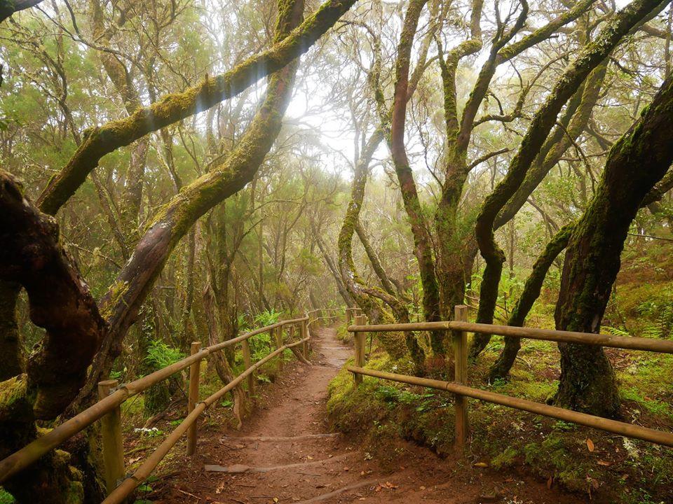 Parque de Garajonay La Gomera