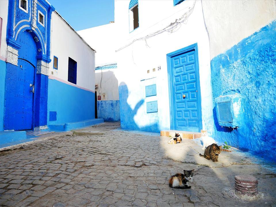 Gatos de Rabat