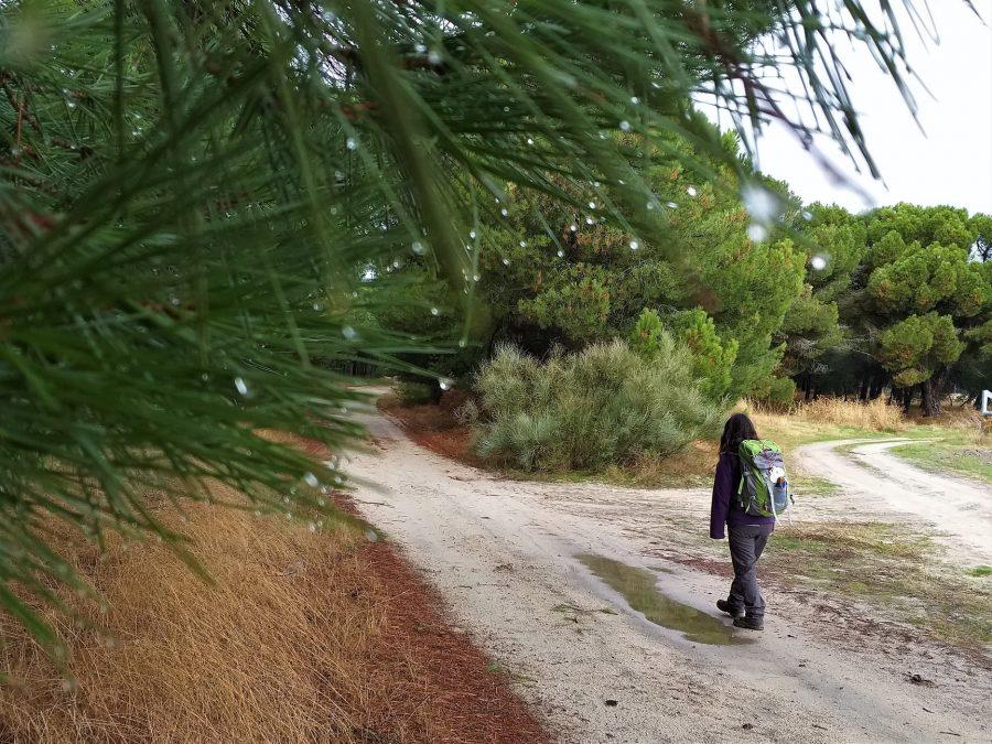 De Alcazarén a Valdestillas por el Camino de Madrid a Santiago