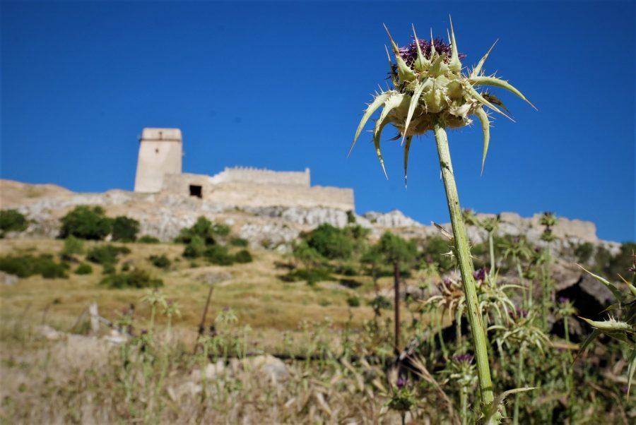 Castillo de Taibilla, Nerpio
