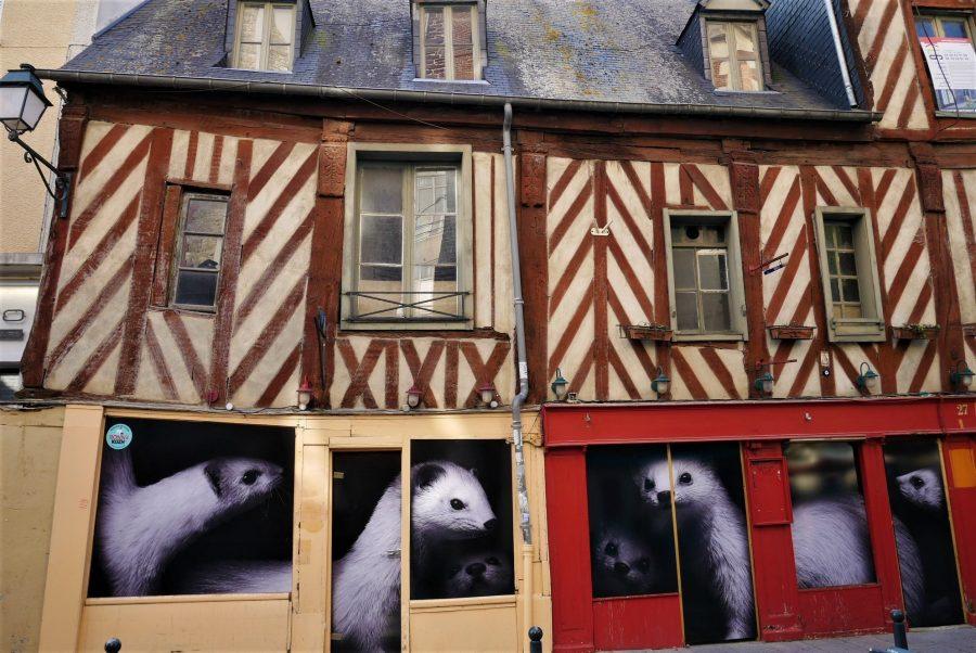 Armiños en Rennes