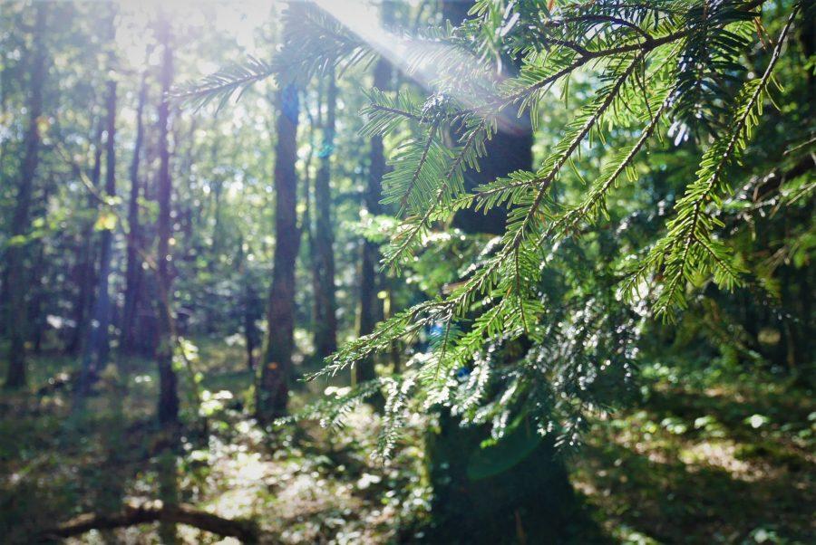 La magia del bosque de Broceliande