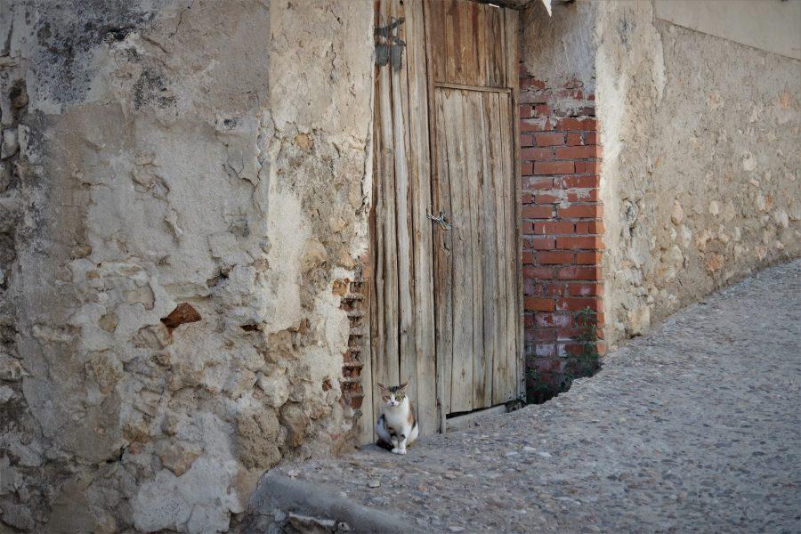Gato en Pastrana