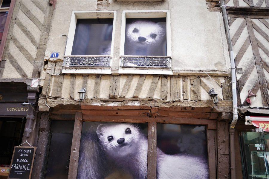 Los armiños de Rennes