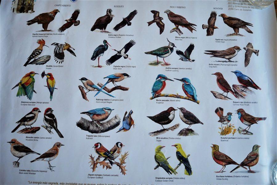 Pájaros en el valle del Alberche