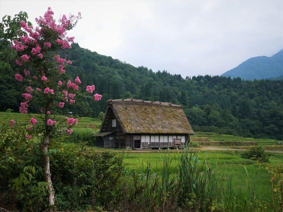 Shirakawa-go, casas típicas
