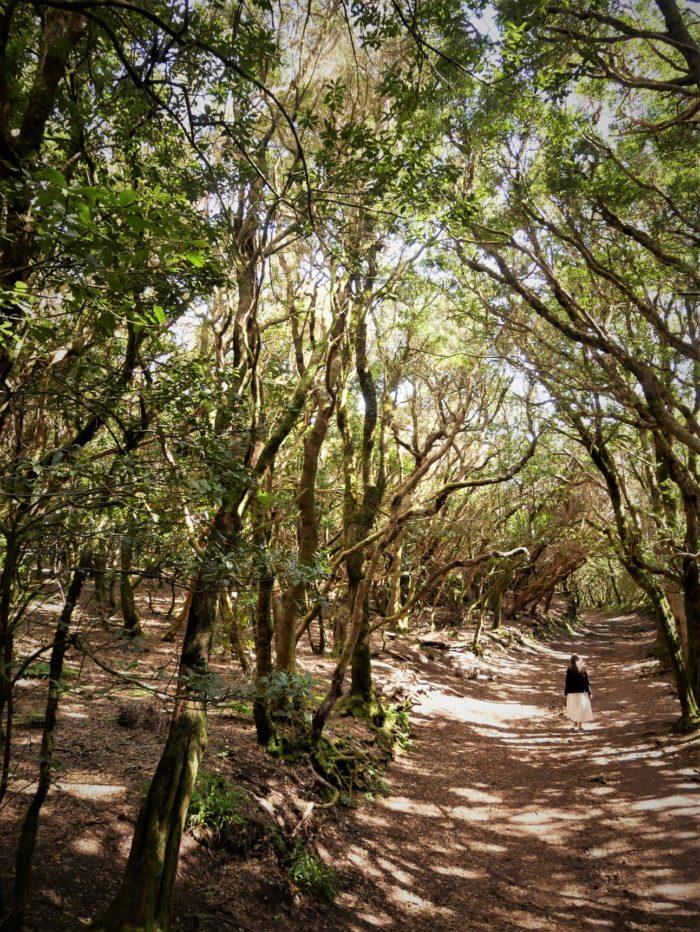 Bosque de Anaga, Tenerife