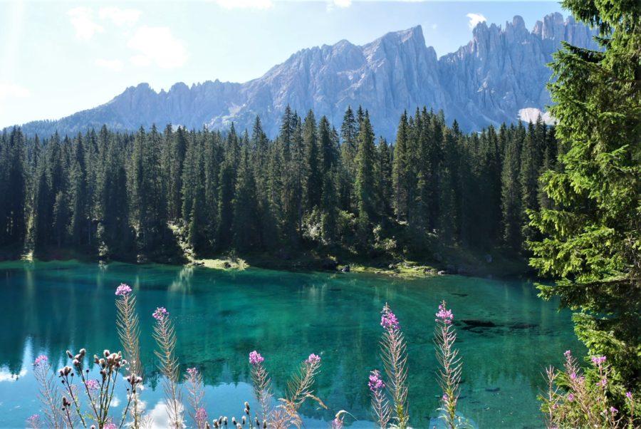 Flores en el lago Carezza