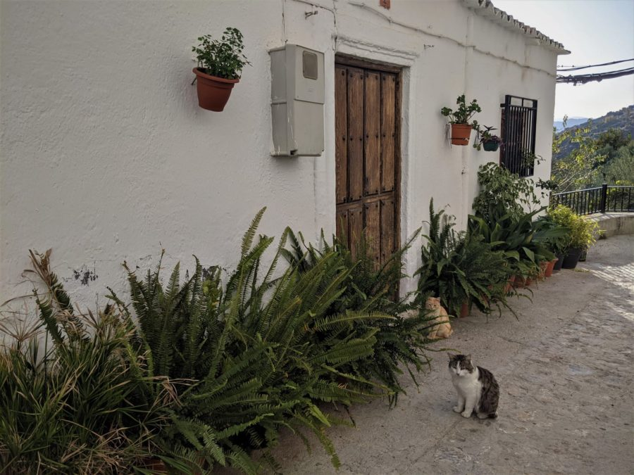 Gatos en Soportújar