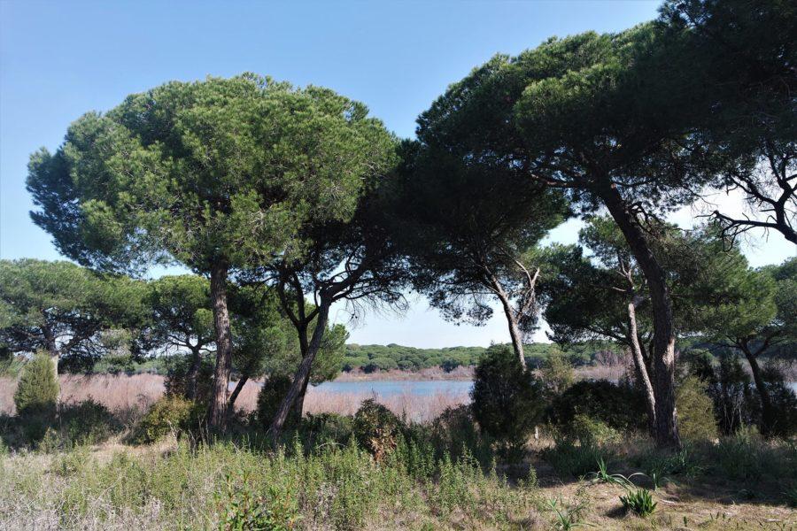 Laguna de El Portil, Huelva