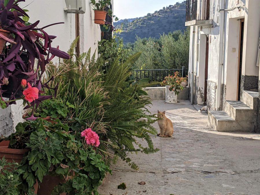 Gatos en la Alpujarra granadina