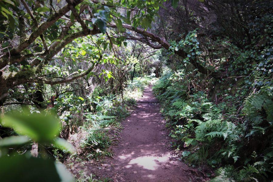 Bosques de laurisilva en Canarias