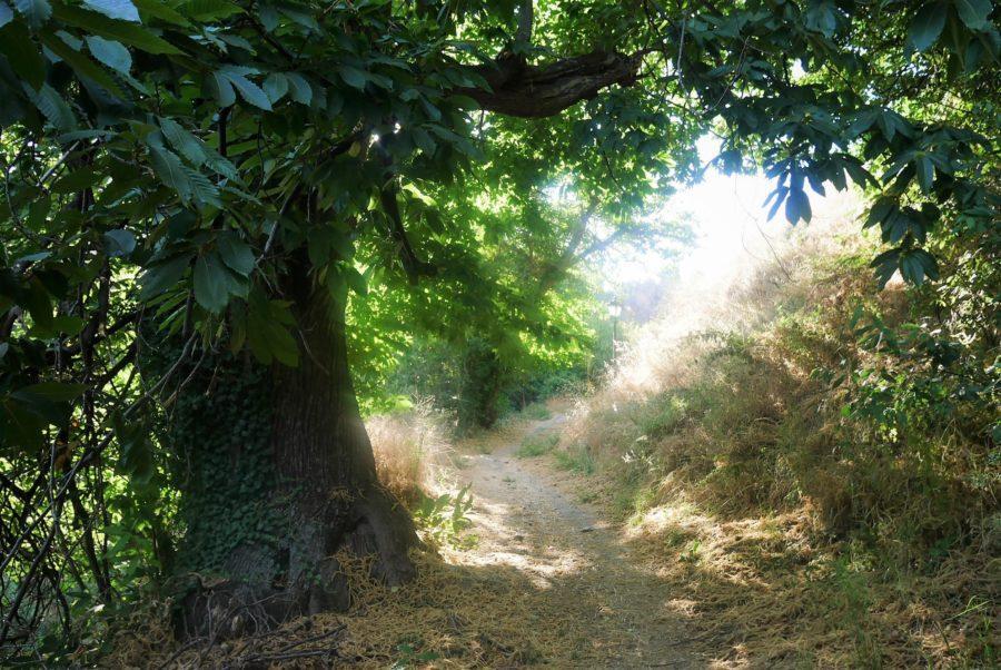 Bosque de castaños en Capilerilla
