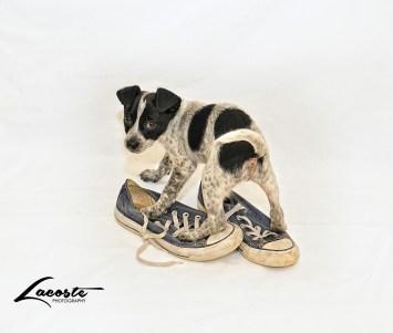 Calvin & Converse