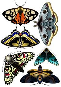 Flash papillon fait Wan