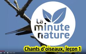Pourquoi les oiseaux chantent ? – Une minute nature de la Salamandre