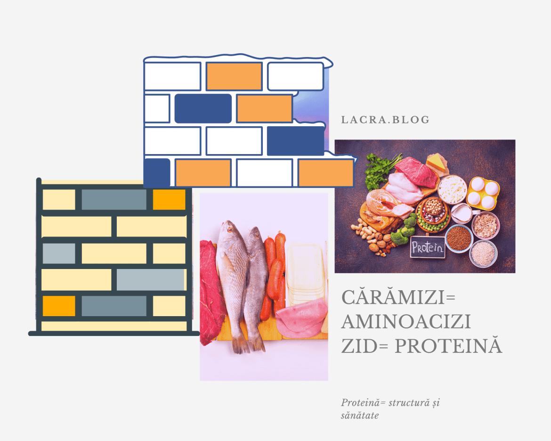 Experiment : glicemia, proteina și cetoza ( partea întâi )