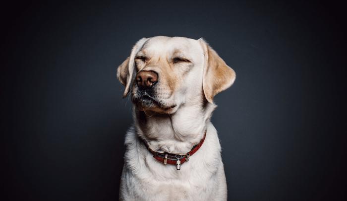 nat-geo-perros