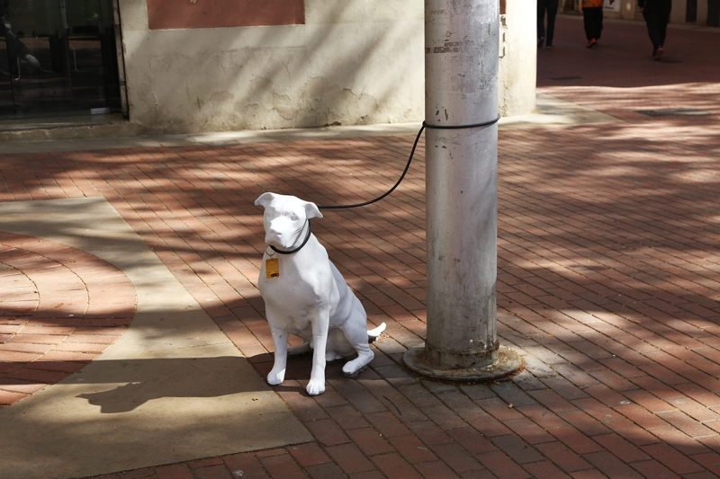 Risultati immagini per Barcelona estatuas en la calle de perros abandonados