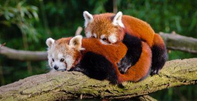 Soñar con abrazo