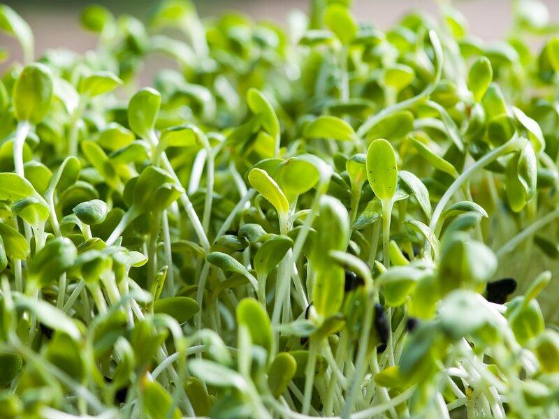 Soñar con alfalfa